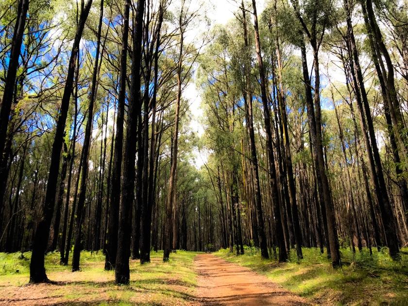 Sylvan forest